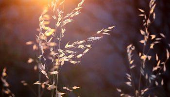 Une année sabbatique pour le blog